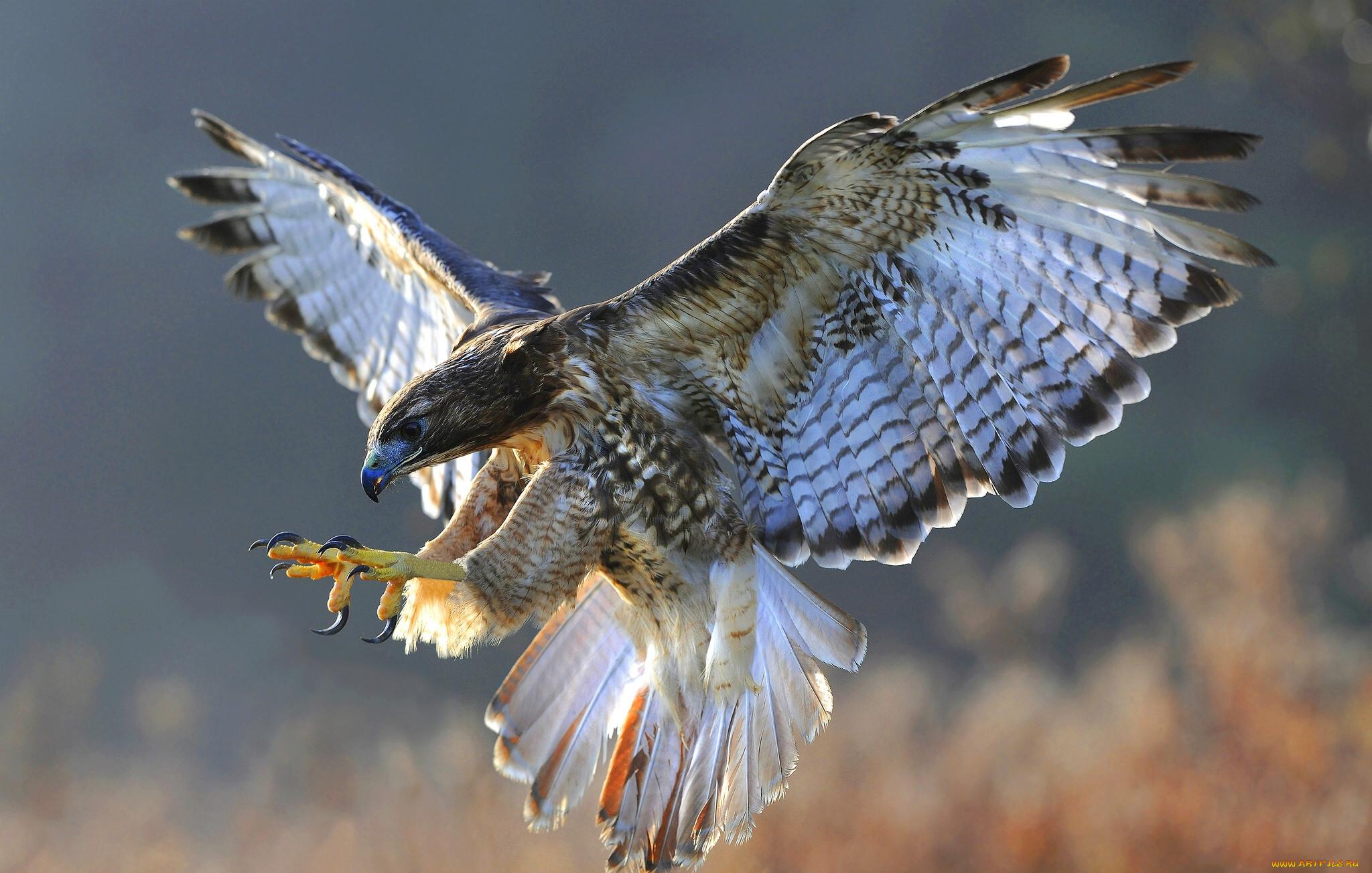 Фото какие птицы поют вечером в лесу вас заинтересовал
